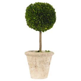 Preserved Boxwood Topiary