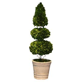 Preserved 3-Tier Boxwood Topiary