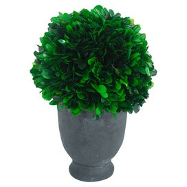 Faux Boxwood Topiary in Urn