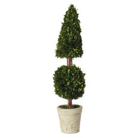 "Preserved 36"" Boxwood Topiary"