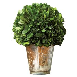 Perserved Ball Topiary in Vase