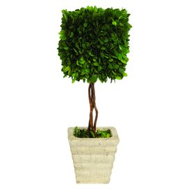 Preserved Boxwood Square Topiary in Planter