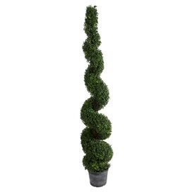 Preserved Spiral Boxwood Topiary
