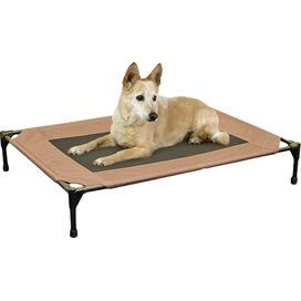 Elevated Pet Cot in Brown