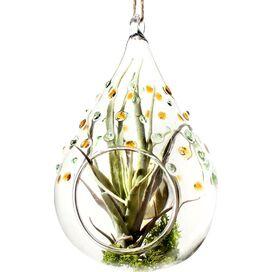 Hanging Solar Terrarium Lantern