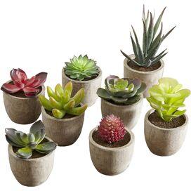 8-Piece Covina Succulent Set